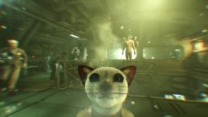 Kočkoopice